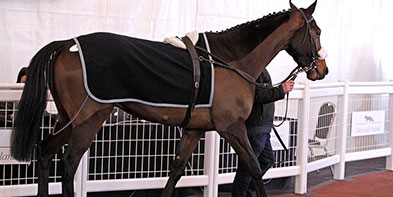 Best-Prices-Horse-Sales.jpg