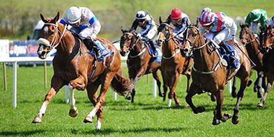 ballinroe-racing-ireland.jpg